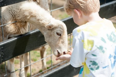 alegre-farm-birthday-party-petting-zoo